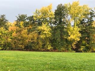 پاییز بوستون به روایت تصویر