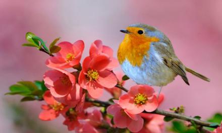 مناظره گل و بلبل