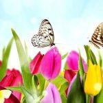 صحرا و تماشای بهار